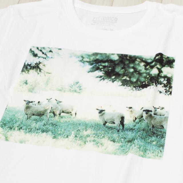 写真Tシャツ フォトTシャツ 羽田誠